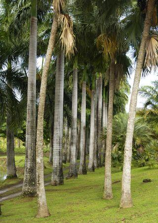 martinique: Francia, el parque Habitation Clement en Martinica
