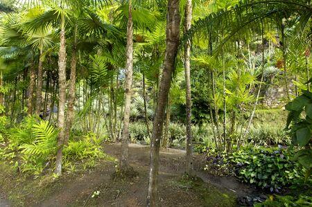 martinique: Francia, el pintoresco jard�n Habitation Anse Latouche en Martinica