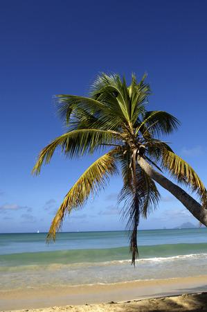 indies: France, Martinique, Salines beach in Sainte Anne