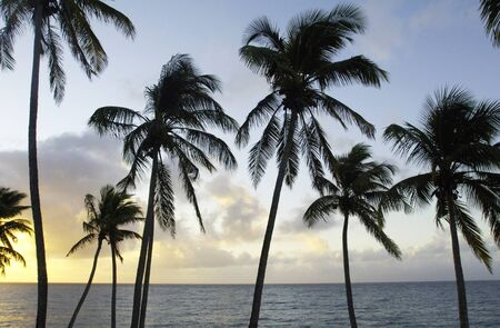 indies: the coast of  Le Diamant in Martinique Stock Photo