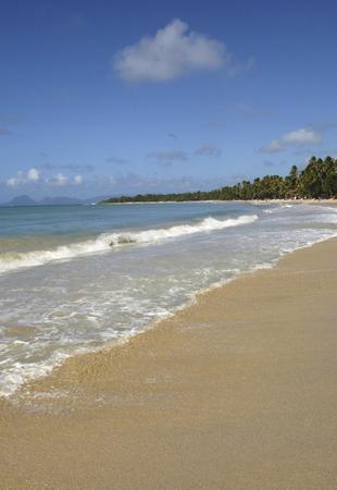 martinique: Francia, Martinica, playa Salines en Sainte Anne Foto de archivo