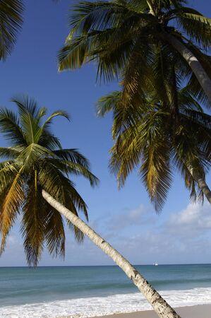 anne: France, Martinique, Salines beach in Sainte Anne
