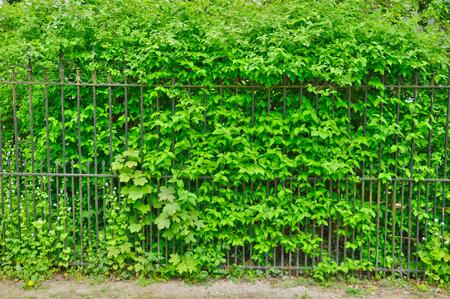 ile de france: Ile de France, the Gros Murs street in Les Mureaux