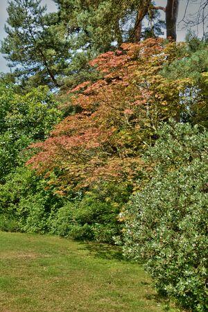 sur: France, the Bois des Moutiers park in Varengeville sur Mer Stock Photo
