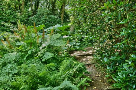 bois: France, the Bois des Moutiers park in Varengeville sur Mer Stock Photo