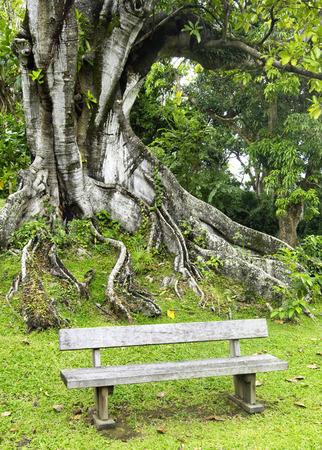 habitation: France, the Habitation Clement park in Martinique
