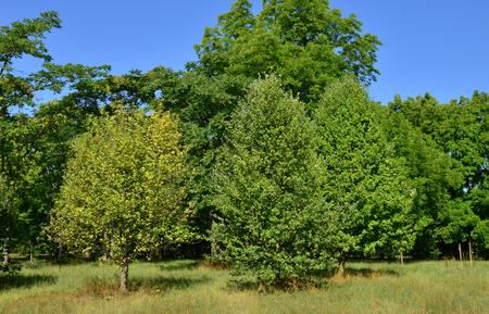 ile de france: Ile de France, the arboretum  of Chevreloup in Rocquencourt Editorial