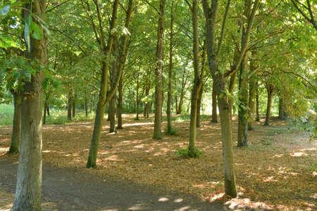 ile de france: Ile de France, the forest of Saint Germain en Laye