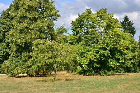ile de france: Ile de France, the arboretum  of Chevreloup in Rocquencourt Stock Photo