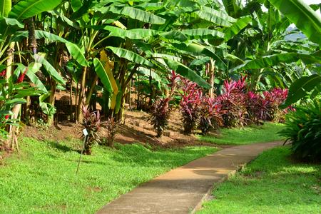 martinique: Martinique, the banana museum of Sainte Marie in West Indies
