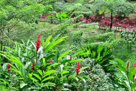 alpinia: Martinique, the domaine d emeraude park in Morne Rouge in West Indies Stock Photo
