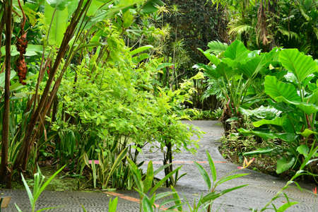 picturesque: France, Martinique, the picturesque garden of Balata Stock Photo