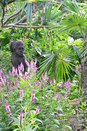 esclavo: Martinica, la pintoresca sabana esclavo de Les Trois Ilets en West Indies Foto de archivo