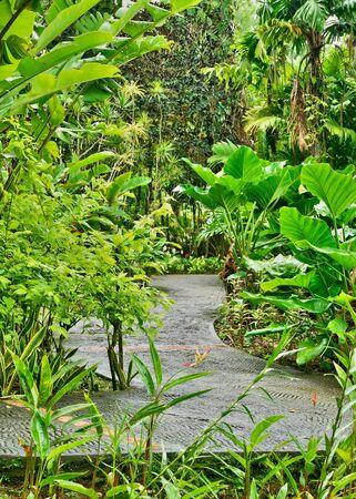 France, Martinique, the picturesque garden of Balata Stock Photo