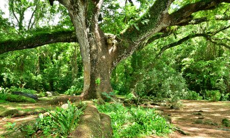 habitation: Martinique, the picturesque Habitation Ceron in Le Precheur in West Indies