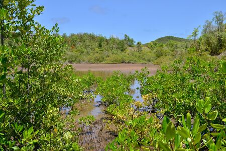 indies: Martinique, the nature reserve of caravelle in Tartane in West Indies Stock Photo