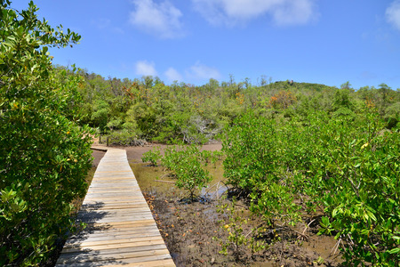 Martinique, the nature reserve of caravelle in Tartane in West Indies 版權商用圖片