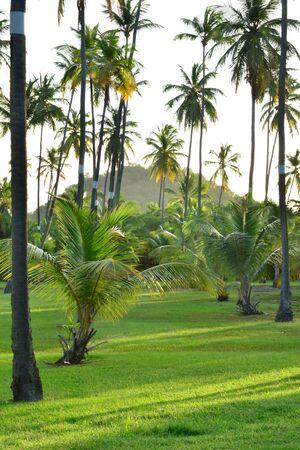 anne: Martinique, a picturesque park in Sainte Anne in West Indies