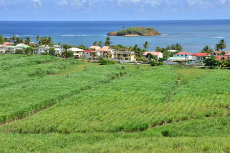 indies: Martinique, the picturesque village of Tartane in West Indies