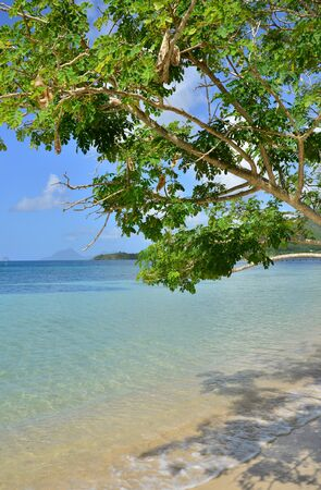 anne: Martinique, the coast of Sainte Anne in West Indies