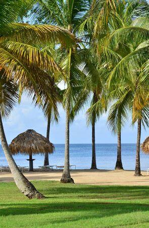 indies: Martinique, the coast of Sainte Anne in West Indies