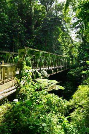 indies: Martinique, the picturesque bridge of Grand Riviere in West Indies