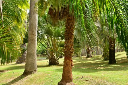 habitation: Martinique, the park of picturesque Habitation Clement in Le Francois in West Indies Stock Photo