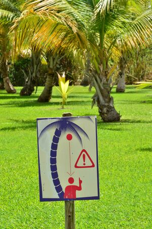 peril: Martinique, sign of coconut fall in a park in the city of Sainte Anne