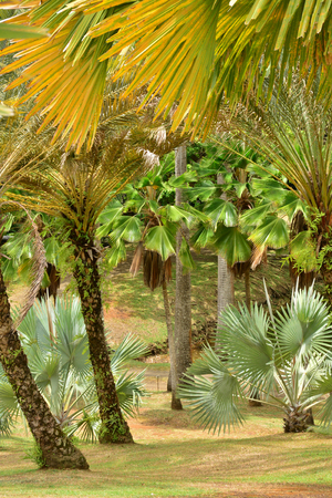 clement: Martinique, the park of picturesque Habitation Clement in Le Francois in West Indies Stock Photo