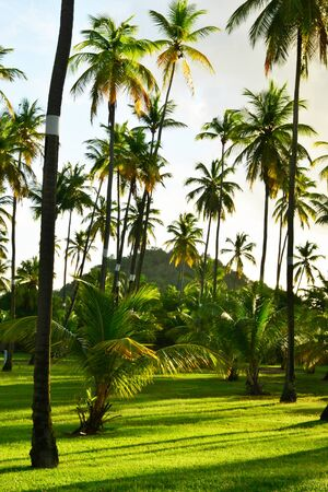 indies: Martinique, a park in Sainte Annee in West Indies Stock Photo