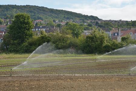 market gardener: Triel sur Seine, France - august 12 2015 : market gardening, watering in the fields Editorial