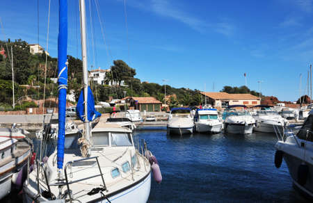 mimose: Th�oule sur Mer, Francia