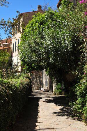 mimose: Bormes les Mimosas, Francia, il pittoresco villaggio in primavera