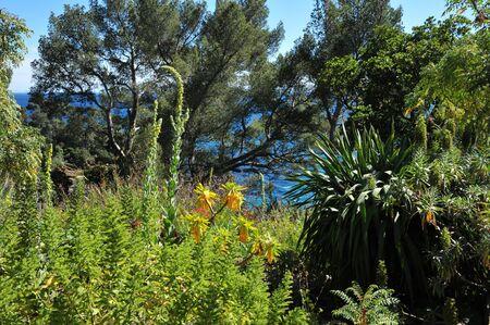sur: Rayol Canadel sur Mer,  the estate Rayol garden in spring