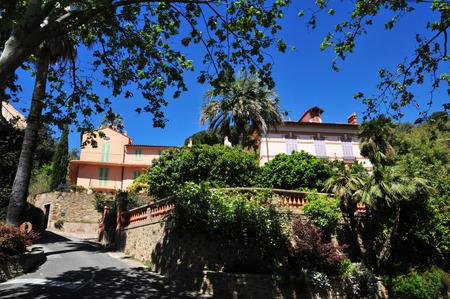 mimose: Bormes les Mimosas, il pittoresco borgo antico in primavera