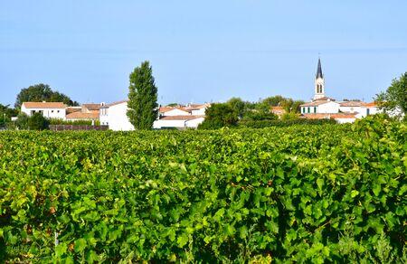 're: La Couarde sur Mer, France - september 26 2016 : vineyard around the village in autumn