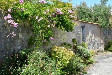 marie: Sainte Marie de Re, France - september 25 2016 : the picturesque village in autumn Editorial