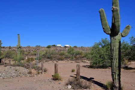 Prescott, USA - july 7 2016 : Saguaro cactus in the countryside