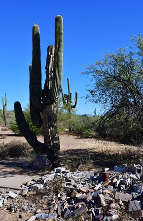 Saguaro cactus in the countryside