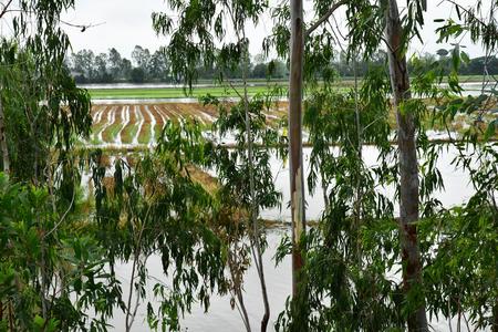 Chau Doc; Socialist Republic of Vietnam - august 19 2018 : the countryside landscape