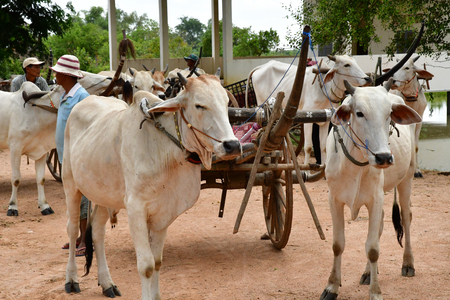 Kampong Tralach; Kingdom of Cambodia - august 21 2018 : the picturesque village