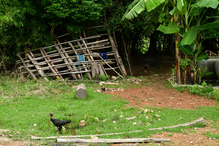 Kampong Chhnang; Kingdom of Cambodia - august 21 2018 : farm in the village Editorial