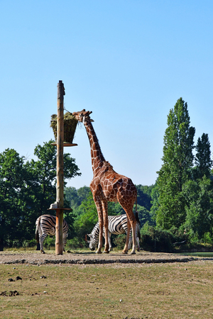 Thoiry; France - august 16 2016 : the African reserve
