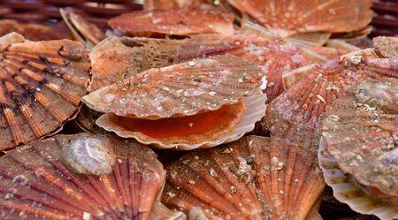 Vernouillet; France - april 7 2017 : scallops at the saturday market