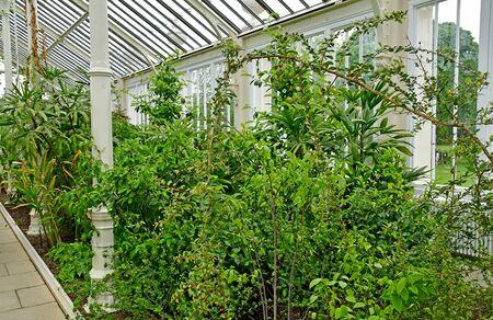 London; Kew, England - may 5 2019 : temperate house in the Kew Royal Botanic Gardens