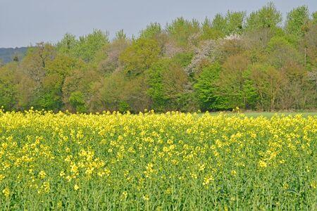 Sagy, France - april 16 2019 : the village countryside Stock fotó