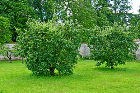 Versailles; France - june 16 2019 : kitchen garden of the king Louis 14, created in 1683 Sajtókép