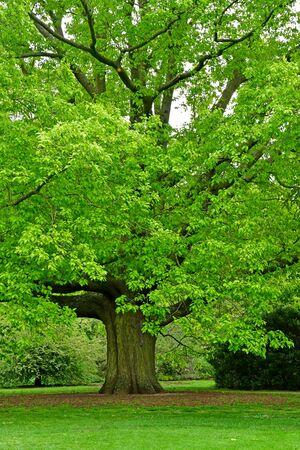 the Kew Royal Botanic Gardens