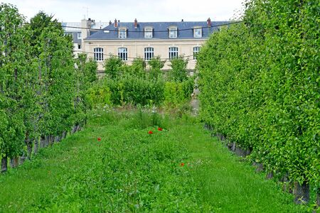 kitchen garden of the king Louis 14, created in 1683