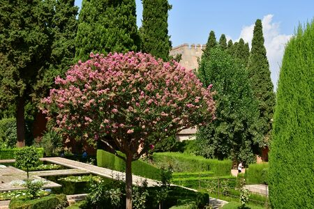 Granada; Spain - august 27 2019 : the Alhambra palace garden 新聞圖片